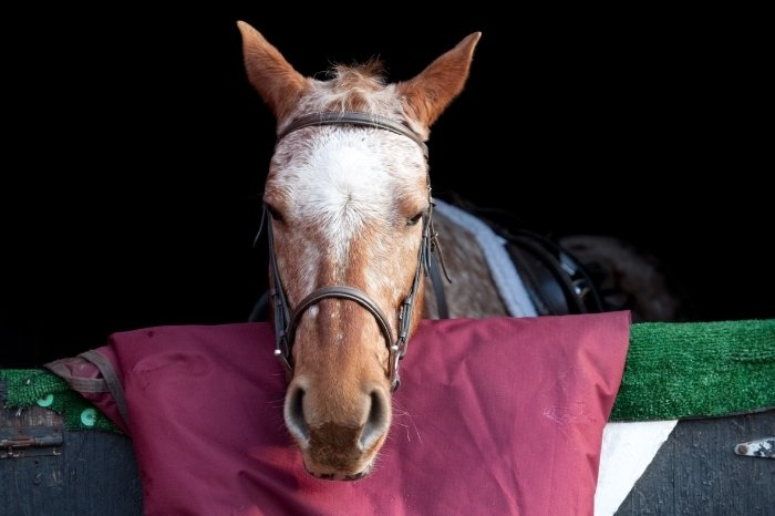 How Can We Make Sure Horses Get Enough Sleep