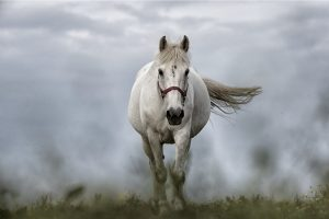 How Many Horsepower Does A Horse Have