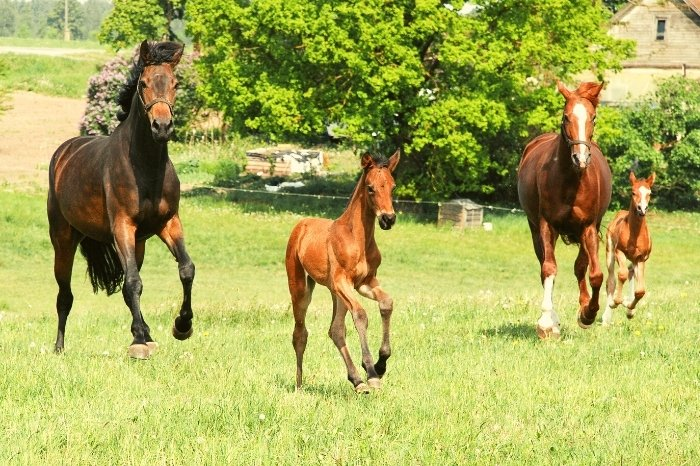 How Much Does A Foal Weigh