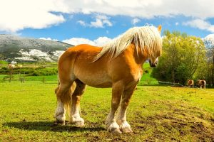 How Much Does A Male Horse Weigh