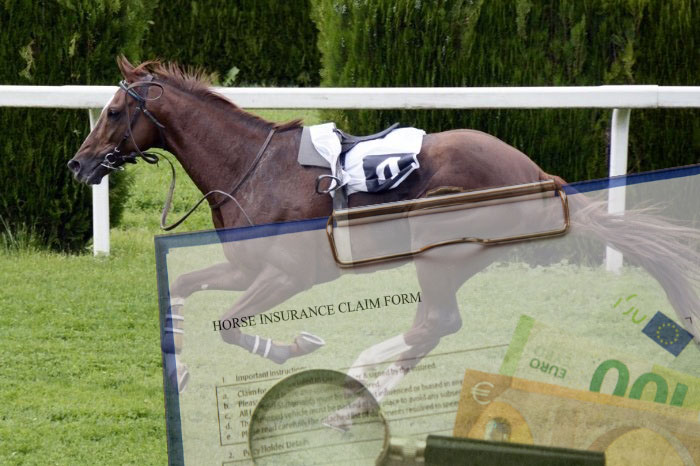 How Much Is Broadstone Horse Insurance