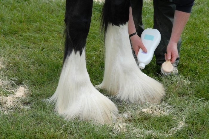 How To Care For Your Horse's Feathers