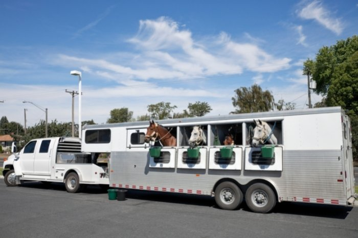 Things To Avoid When Buying A Horse Trailer