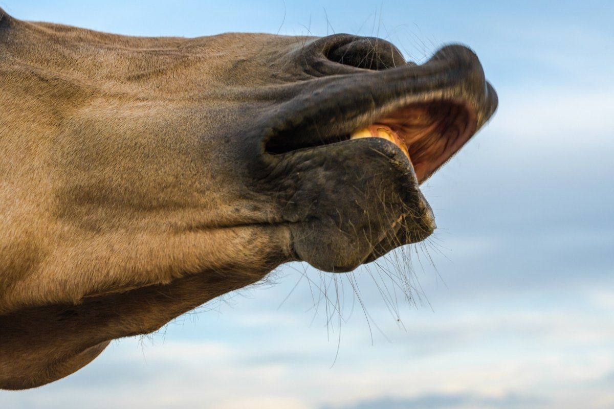 Beginners Guide To How To Read A Horse's Face