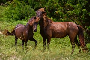 What's The Difference Between Male And Female Horses