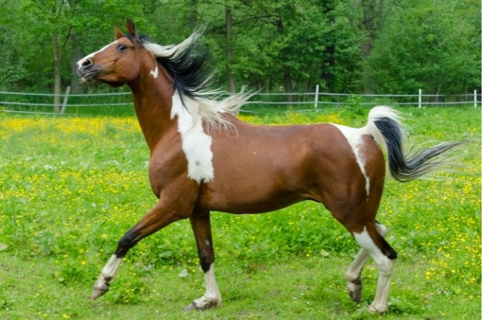 Which Is The Best Gender Of Horse