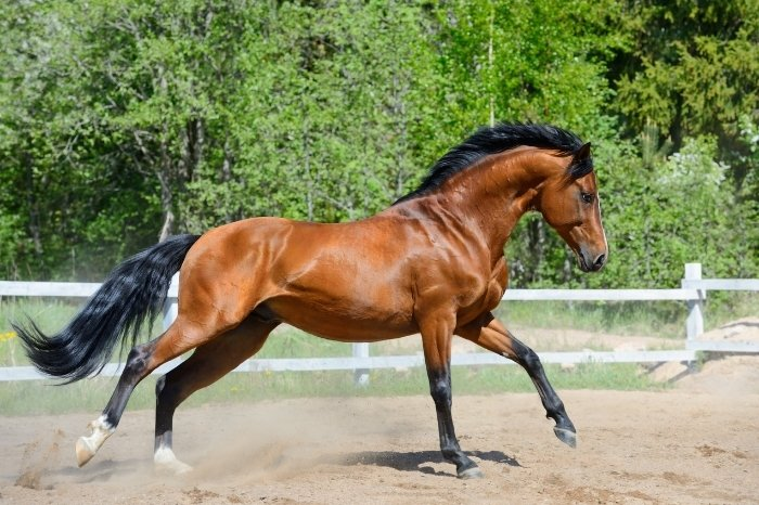 Why Is A Purebred Horse Price Higher