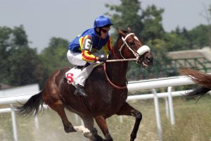 World's Most Expensive Race Horses