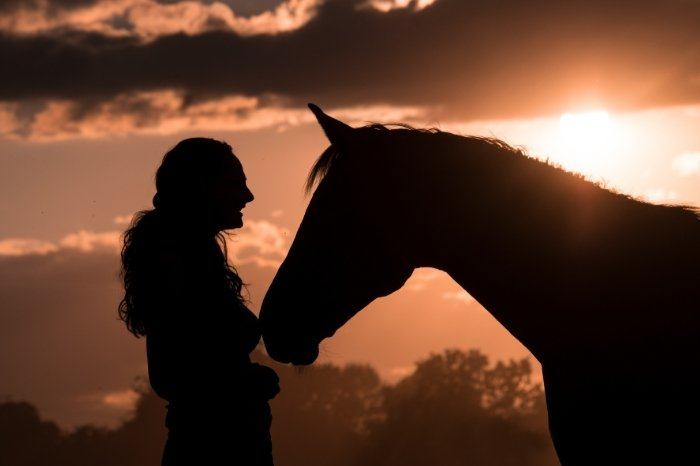 Are Horses As Intelligent As Humans