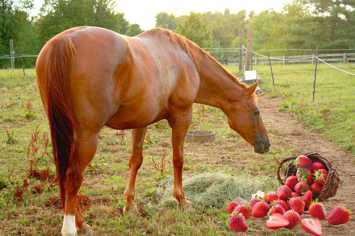 Can Horses Have Strawberries?