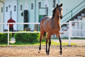 How Much Do Baby Horses Cost