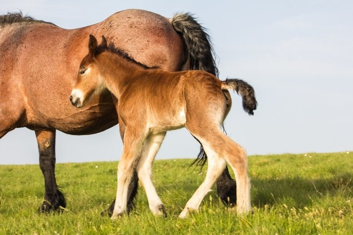 How Much Is a Baby Horse