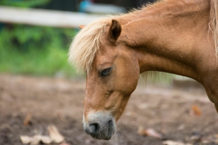 What Are Heaves In Horses