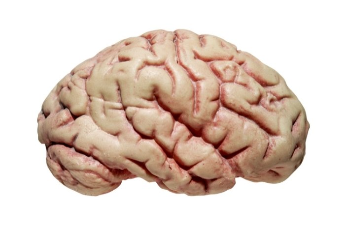 What Is A Brain