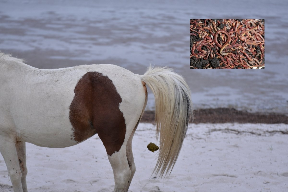 How Long After Worming Horse Are Worms Expelled