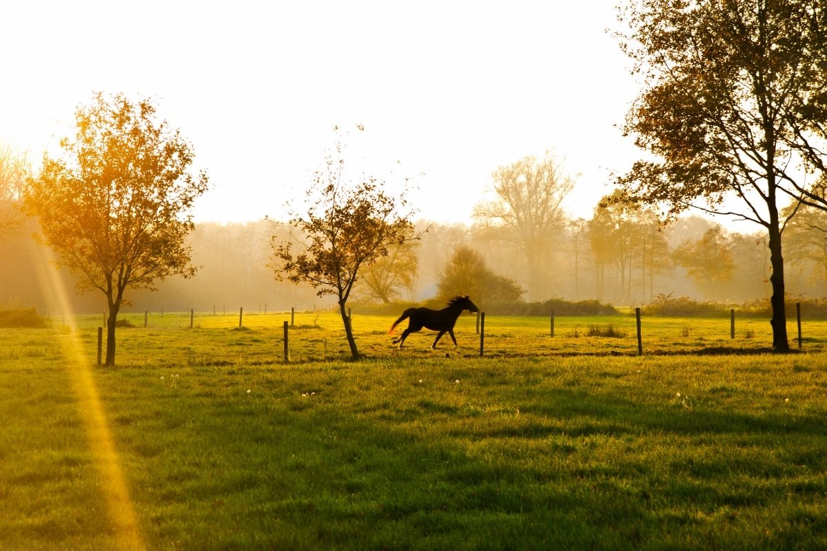 How Many Horses Per Acre Of Land
