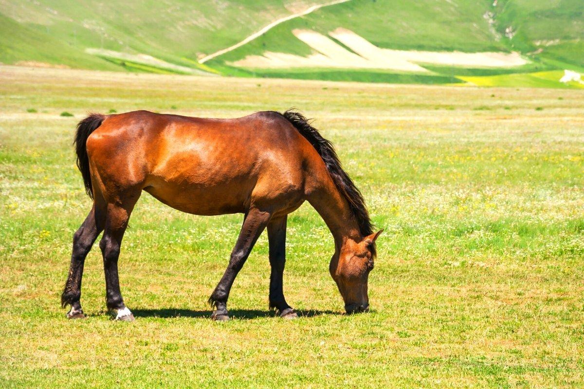 How Much Pasture Per Horse