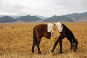 How To Put Weight On A Senior Horse