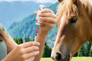 Introducing The 4 Way Horse Vaccine