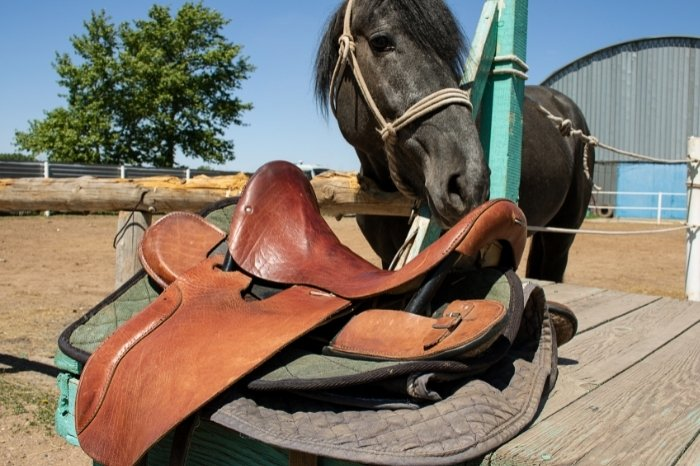 Introducing The Bridle And Saddle