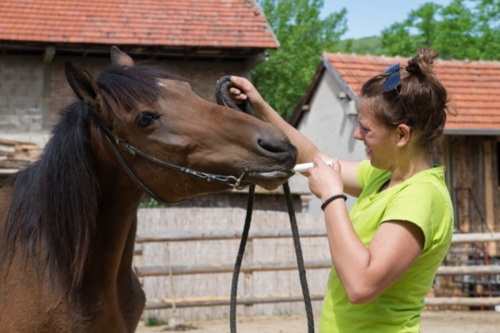 What Is The Banamine Paste Dosage For Horses With Colic?