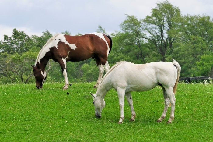 What Is The Purpose Of Horse Grazing