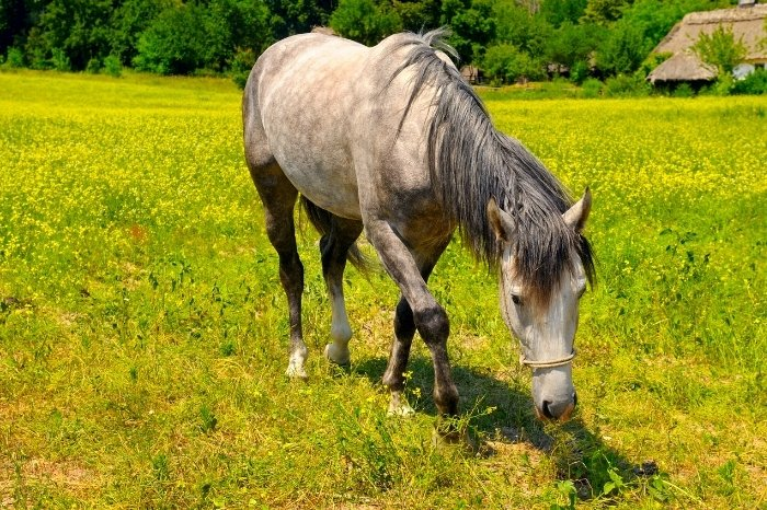 When To Start Putting Weight On An Older Horse