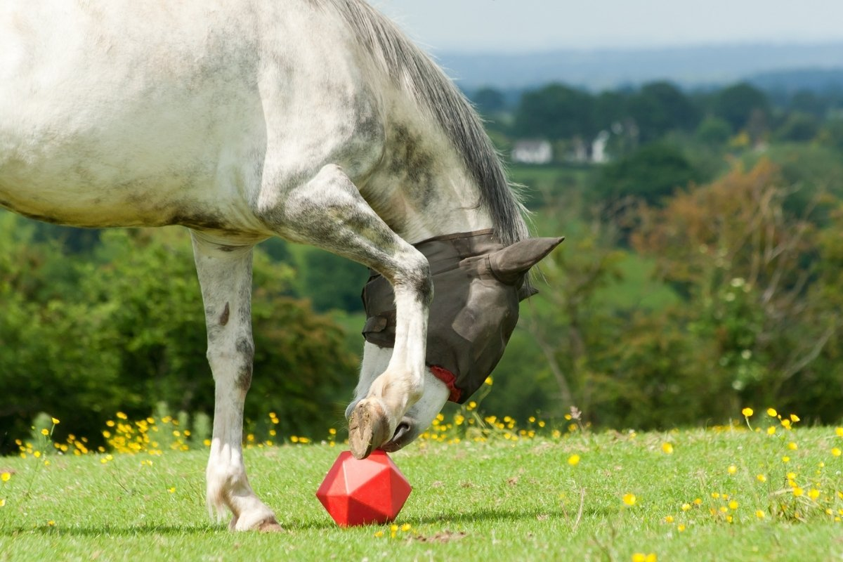 Amazing Toys For Horses To Play With!